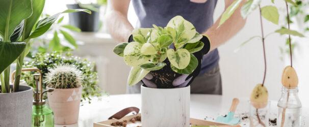 Ingrasamant Natural Organic